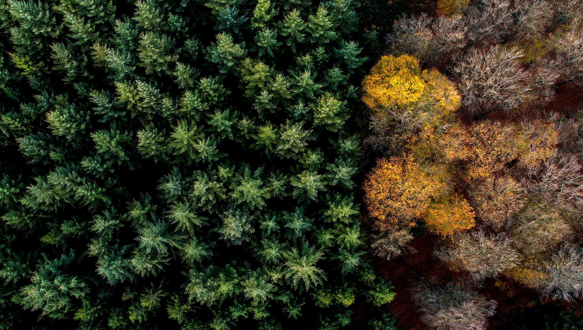 Forêt à Tailles