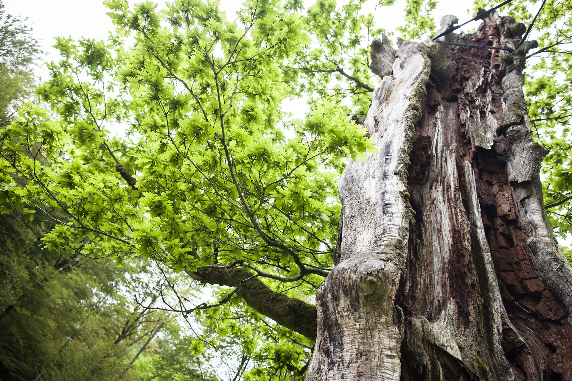 Parc Naturel - Haute-Sûre - Forêt d'Anlier - Province de Luxembourg - balade