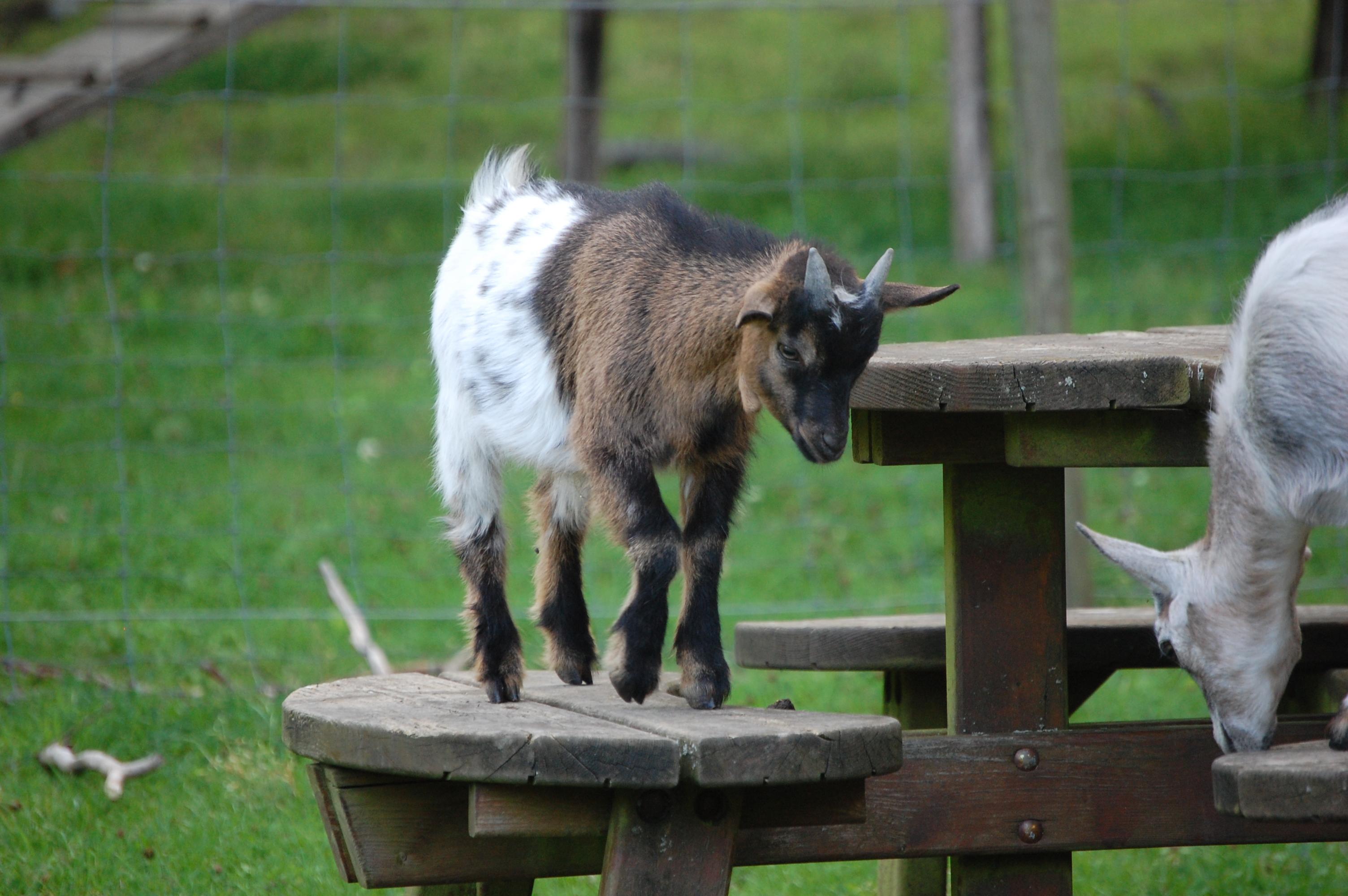 Parc animalier - Nature - famille - enfants - attractions