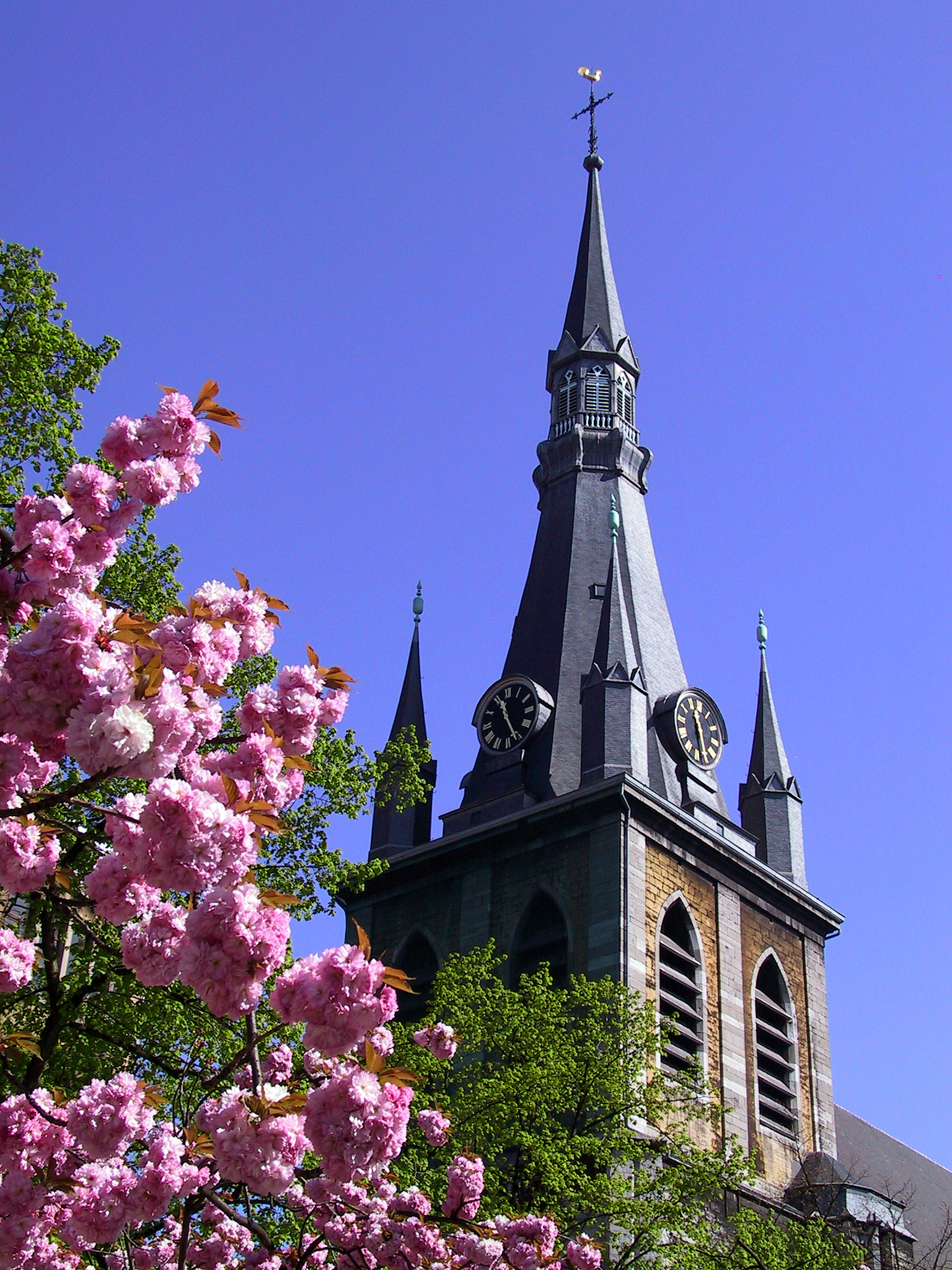 Cathédrale Saint-Paul - Liège - cerisier Japonais - Ciel bleu