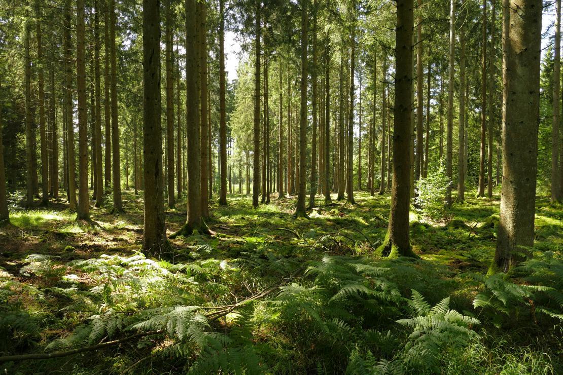 Bain de forêt à Tenneville