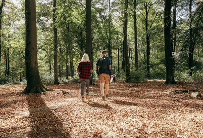 Randonnées dans les bois