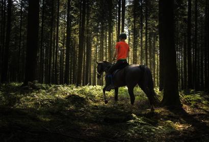 Sentiers du Phoenix-Cavalier en forêt