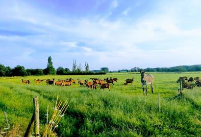 Le Chèvre-Feuille - chèvrerie - fromages - BIO - Haillot