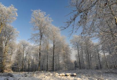 Forêt - Saint-Hubert - Hiver - neige - arbres - blanc