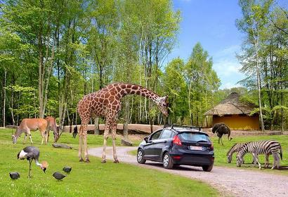 Monde Sauvage - Safari Parc - Aywaille - girafe - parcours