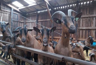 Chèvrerie d'Ozo-IZier-Etable aux chèvres