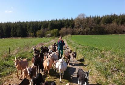 Chèvrerie de Borlon - Durbuy