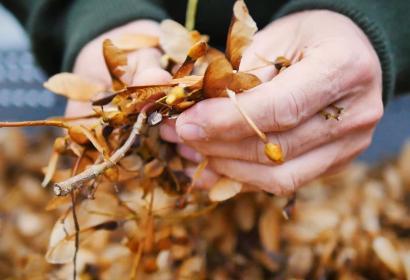 Comptoir forestier - Aye - trésors de la forêt wallonne - Visit'Entreprise