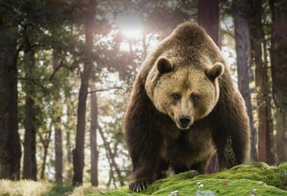 Geschichten über den Bären in der Domäne der Grotten von Han