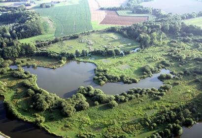 Réserve naturelle - Labuissière - zone marécageuse - oiseaux - nicheurs - migrateurs