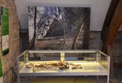 Musée archéologique de la Haute-Meuse - Godinne - Expo permanente - Vue de la sépulture de l'Abri des Autours