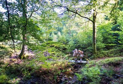 Wallonie - destination - nature - 2020 - Campagne - explorateurs