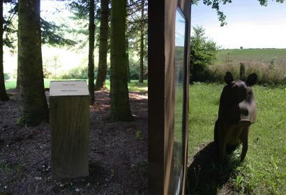 Arboretum - Vaux-sur-Sûre - hêtre - érable - sorbier - noisetier