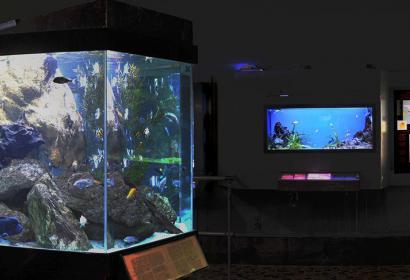 L'Aquarium - Muséum de Liège - panorama