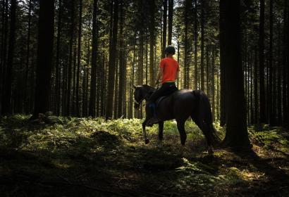 Cavalier avec son cheval dans la forêt