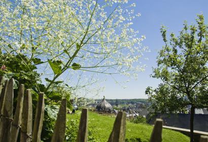 Liège - coteaux de la citadelle - arbre - plante
