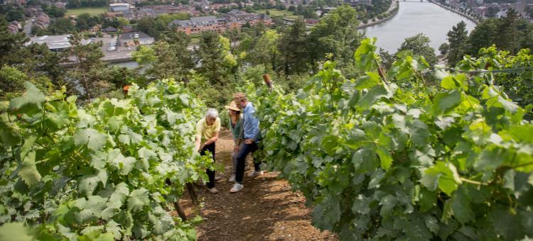Un couple participe à une visite au cœur du Vignoble