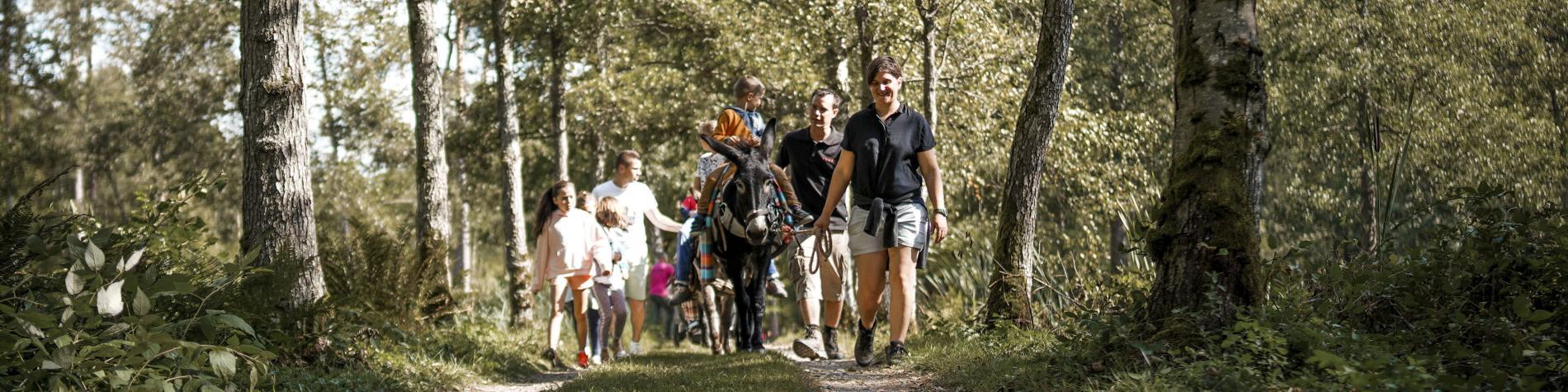 Balade à dos d'âne dans les bois