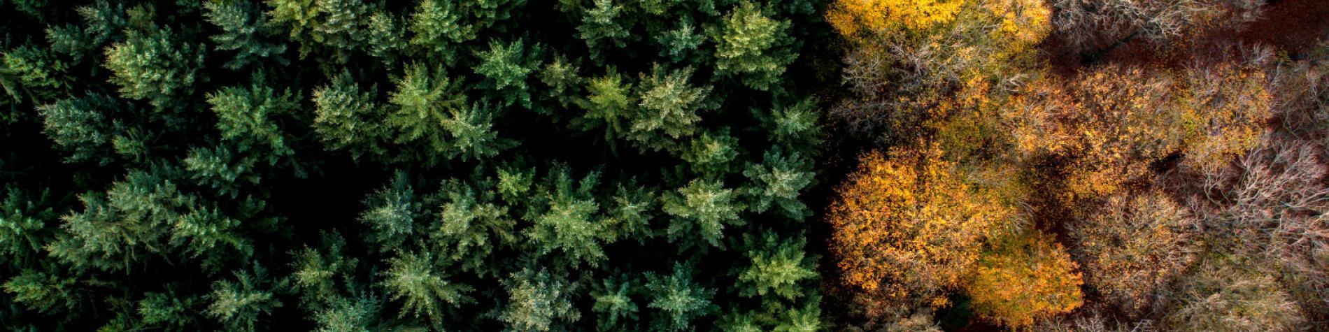 vue aérienne d'une forêt de 2 couleurs