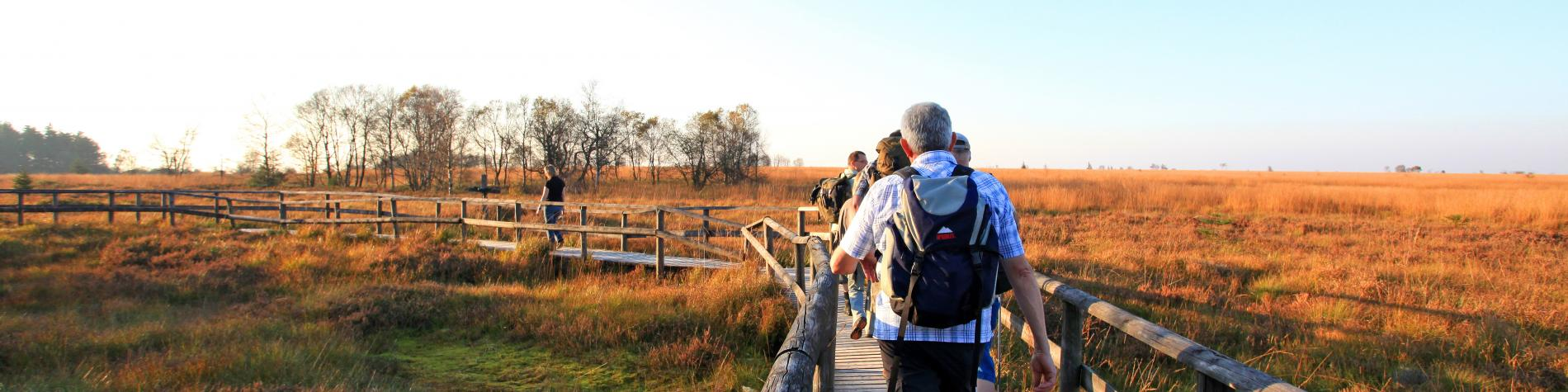 Marcheurs sur les caillebotis des fagnes au Signal de Botrange