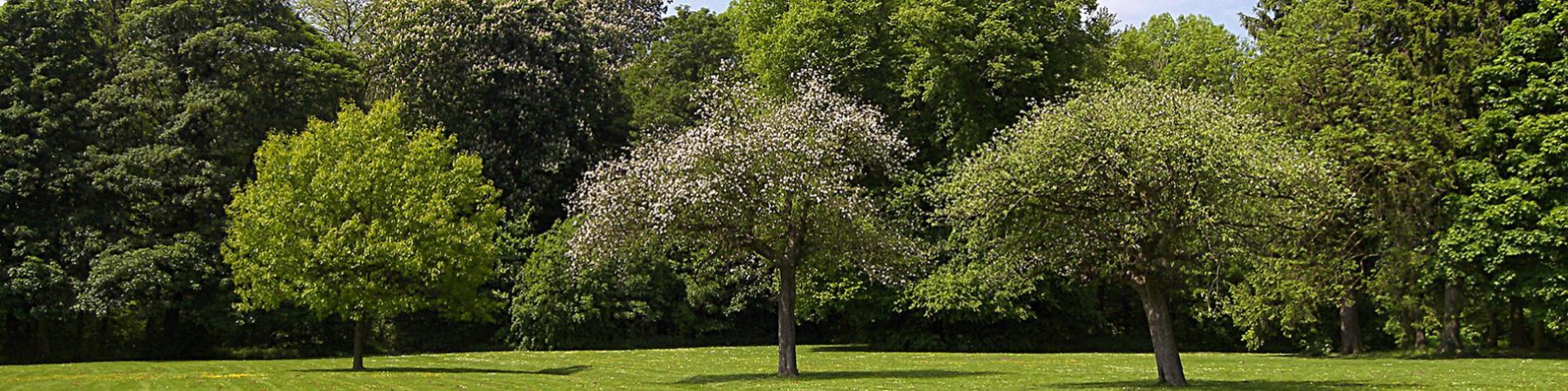 Arboretum - Monceau-sur-Sambre