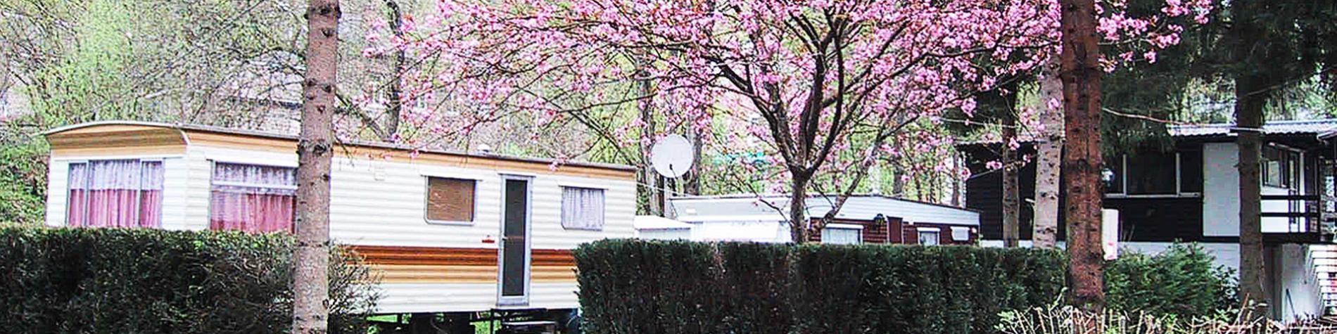 Camping - Marcourt - Rendeux - une cafétaria avec terrasse. un terrain de pétanque. activités organisées - soirées musicales - aire de jeux - bibliothèque