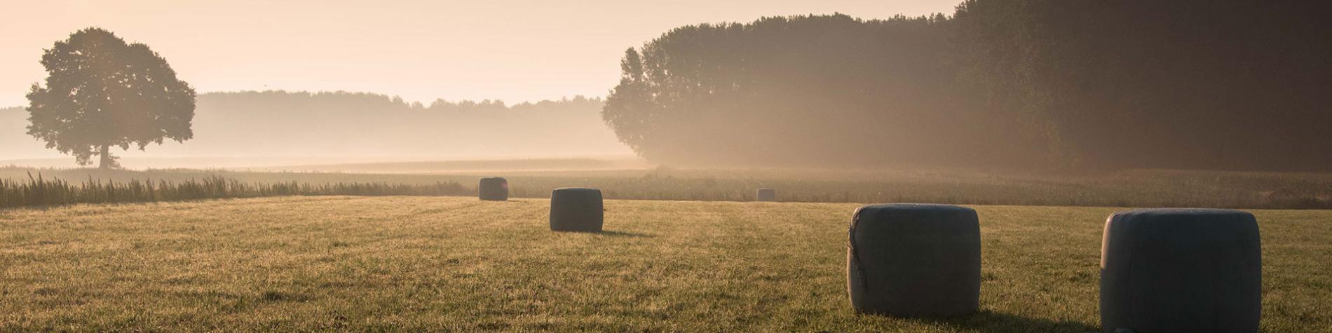 Parc Naturel - Hauts-Pays - Mons - champ - Blaugies - Dour