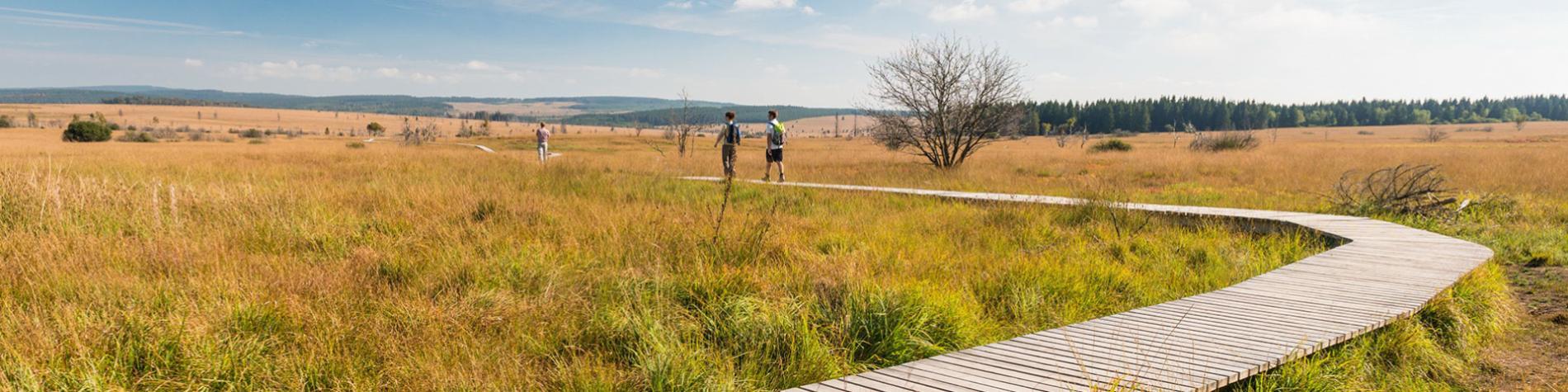 Wandelen In De Belgische Ardennen En Wallonie