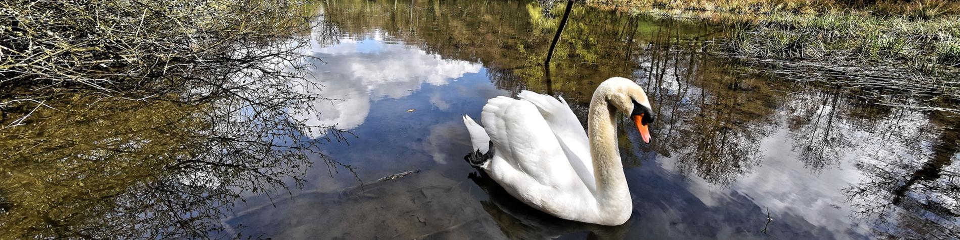 Les Jardins de la Découverte - Lac de Bambois - Fosses-la-Ville - Natura 2000