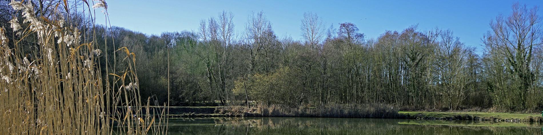 Bois - communal - Buston