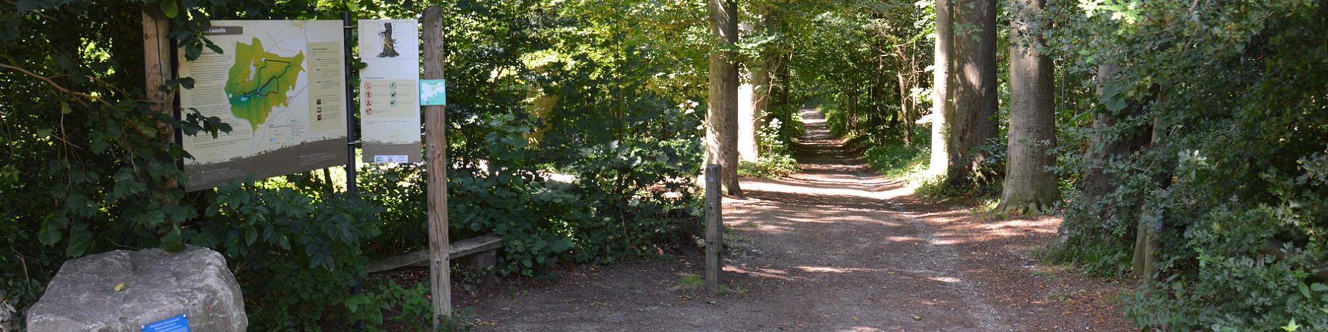 Bois de Lauzelle - Louvain-la-Neuve - Site classé Natura 2000 - 20 ha - patrimoine naturel - Ottignies-Louvain-la-Neuve - Brabant wallon