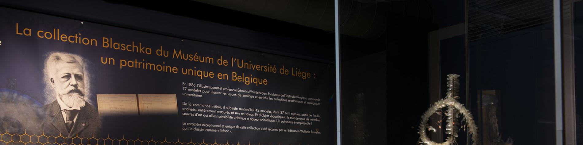 L'Aquarium-Muséum Universitaire - Liège - Plongée magique - monde aquatique - 20 000 spécimens
