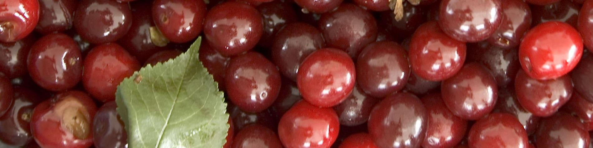 Découvrez la Ducasse aux cerises à Biercée, une tarte aux cerises glorifiée