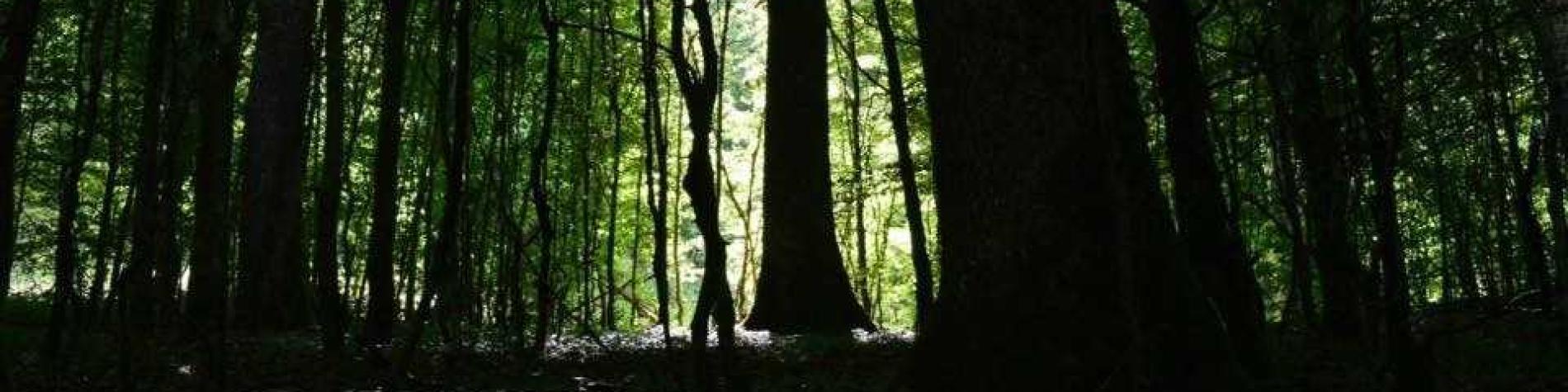 EcoSophia - Sylvothérapie au coeur des forêts
