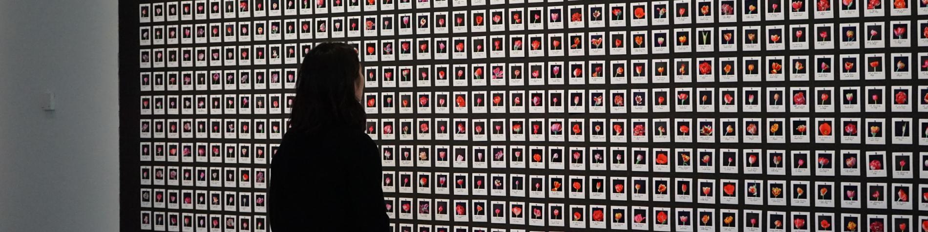 Expo Human machines Pavillon Namur - Vue de l'oeuvre Myriad tulips de Anna Ridler