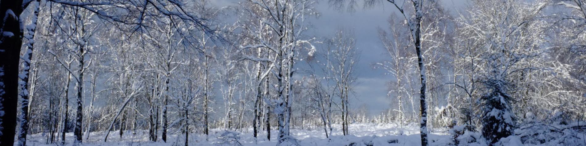 Forêt de la Croix-Scaille - Gedinne