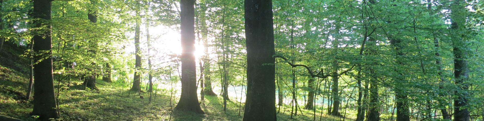 Défi Nature A.S.B.L. - Forêt