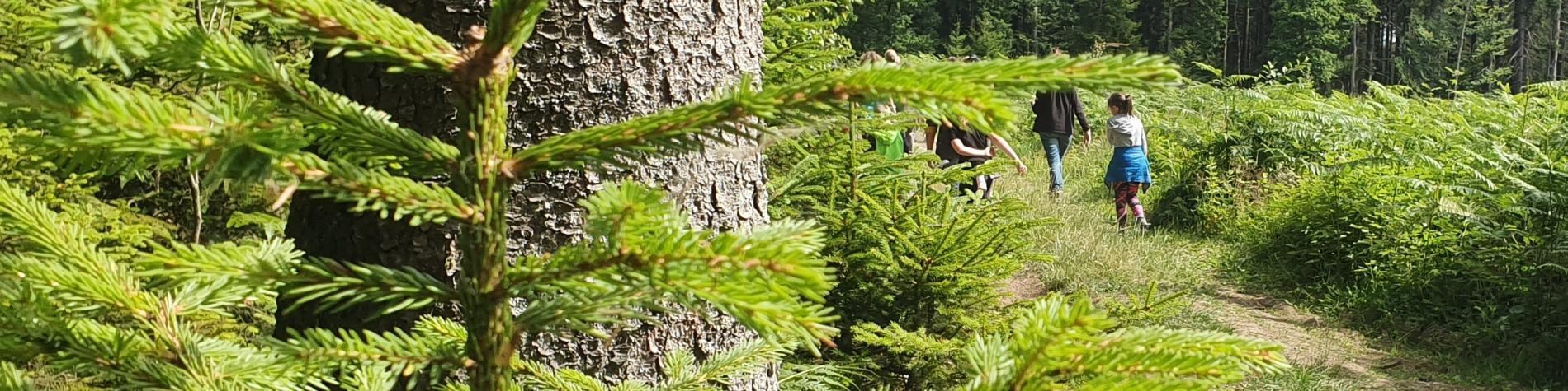 Vue d'une forêt à Tenneville