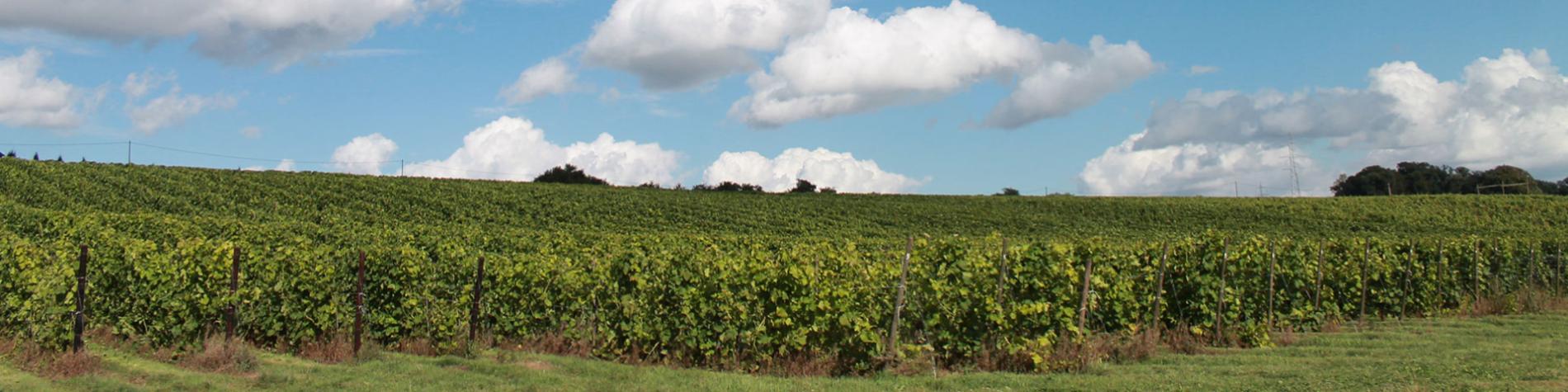 Vin - Domaine du Ry d'Argent - Namur - Bovesse - Vignoble - raisin - chai - cuvée
