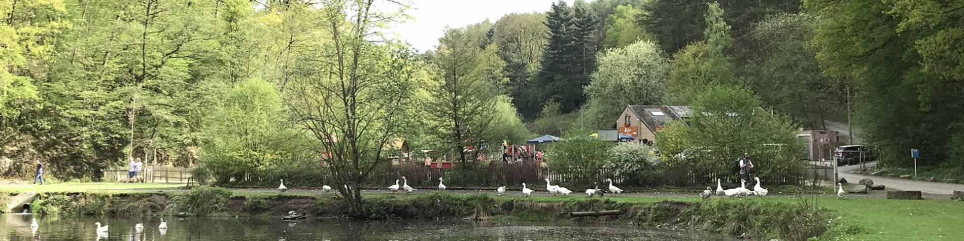 Domaine - Julienne - Visé - étangs - ruisseau - bois