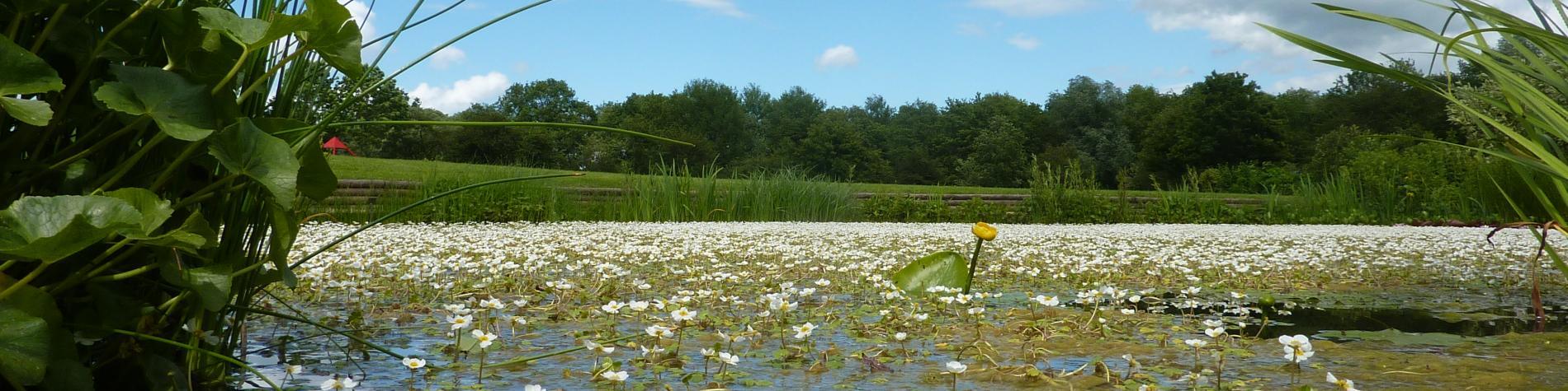 Jardin des Lacs de Bambois