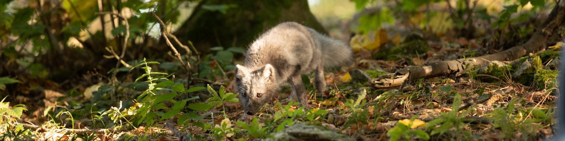 Le parc animalier de Han-sur-Lesse rien qu'à vous au crépuscule