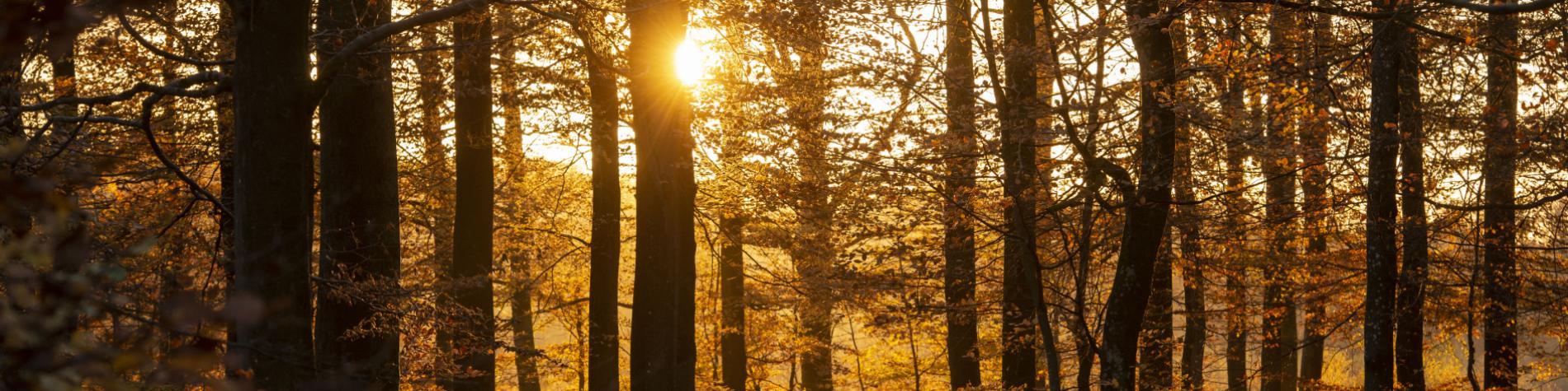 Maison du Tourisme - Wallonie nature - forêt