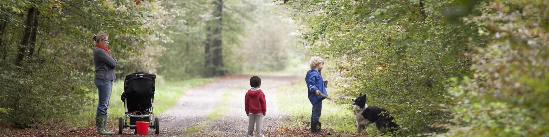 Parc Naturel - Haute-Sûre - Forêt d'Anlier - Province de Luxembourg - balade - champignons