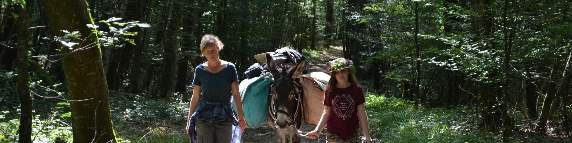 Mont des ânes, promenade avec un âne à Mormont