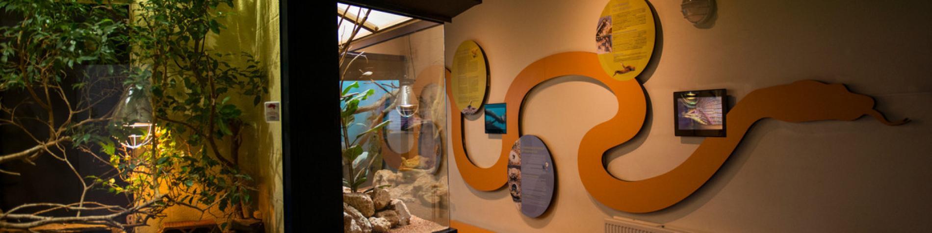 Musée d'Histoire naturelle -Tournai - Vivarium