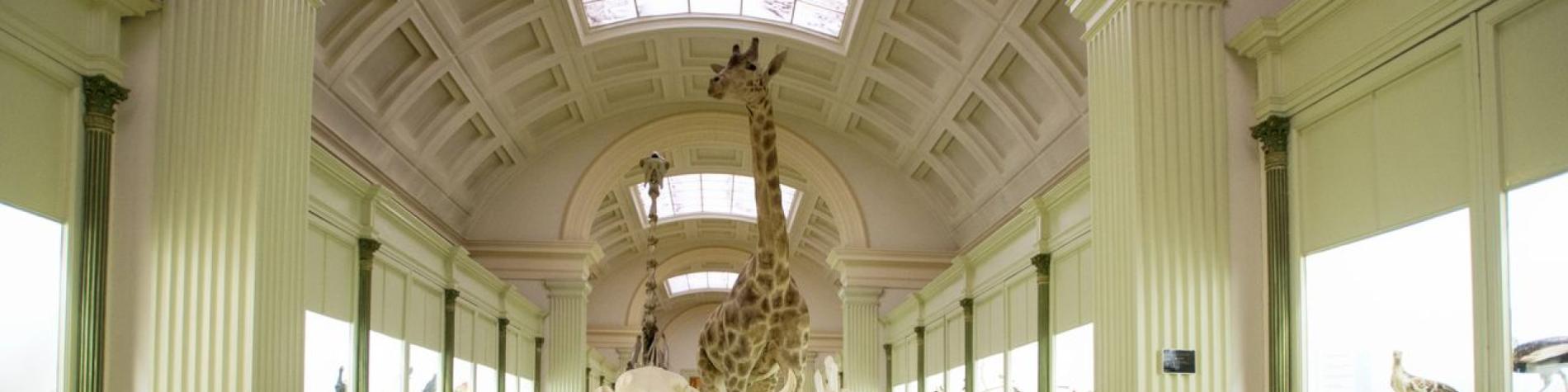 Musée d'Histoire naturelle - vivarium - Tournai - Galerie