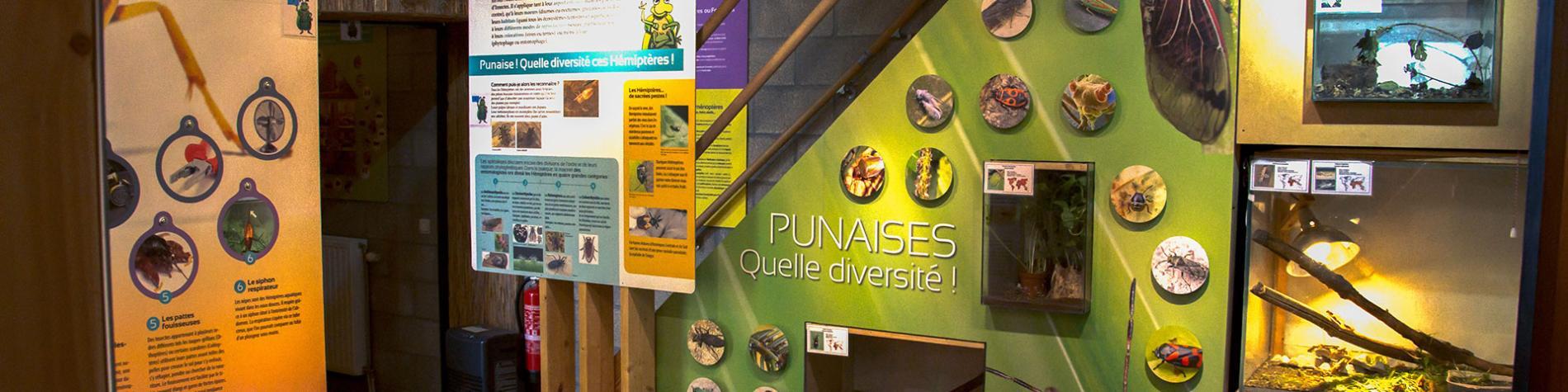 Hexapoda - Insectarium - Jean Leclercq - musée