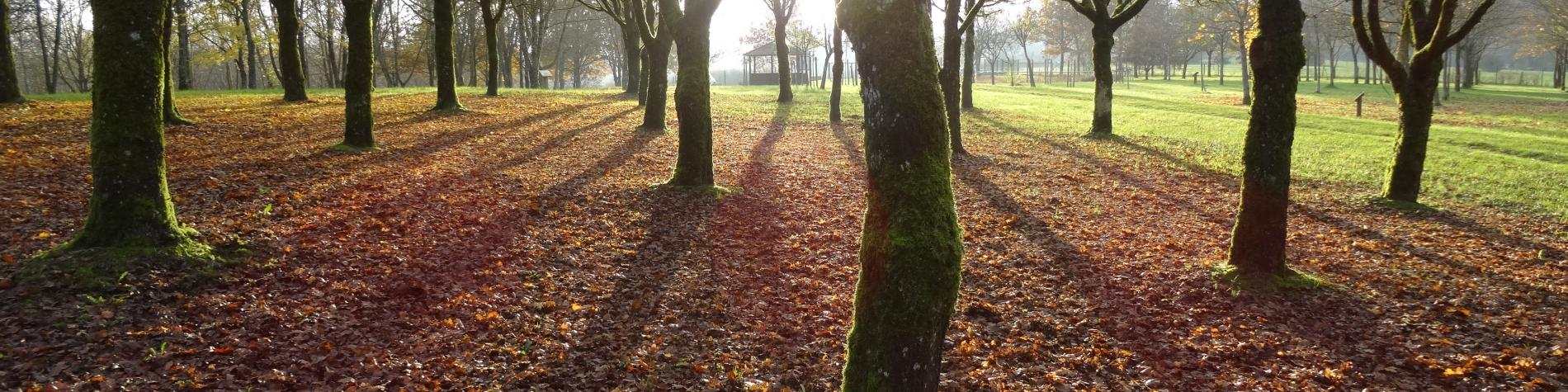 Tapis de feuilles mortes, soleil rasant et arbre en hiver